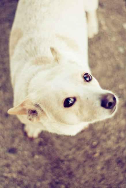 dog-pet-cute-eyes-5575.jpg